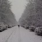 Зимняя уборка в Дендрарии 058.jpg