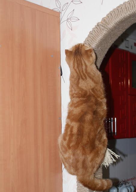 Удаление ногтей у кошки. В какой клинике лучше? - Страница 9 DSC03502