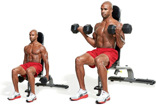 SEATED CURL