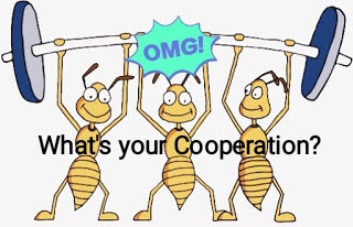 What is your Cooperation?