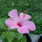 Gardening 2010, Part Two - 101_2488.JPG