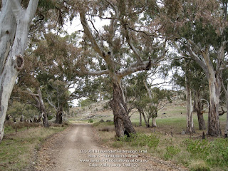 Eden Valley Loop Trail (2)