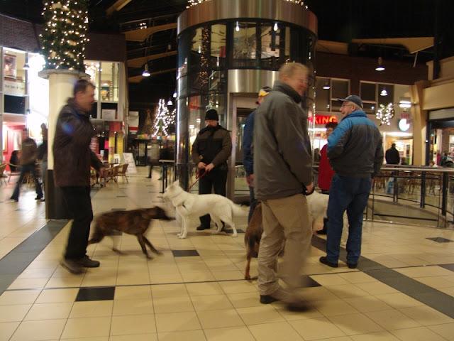 KNON puppys in de stad nov 2008 - DSC09022.JPG