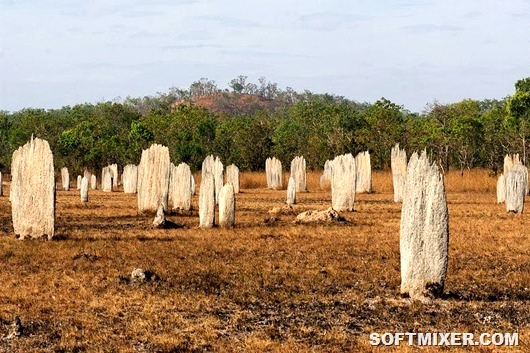 magnetic-termites-62