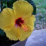 Gardening 2010 - 101_0731.JPG