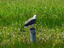 wildlife-birds-1.jpg