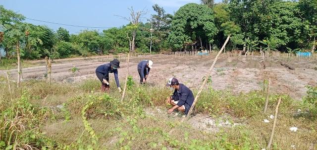 Wujudkan Konsep Penanaman Berbasis Agrikultur Demi Pemulihan Per Ekonomian Masyarakat Kepulauan Seribu Di Tengah Pandemi Covid 19
