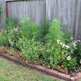 Gardening 2010, Part Two - 101_3248.JPG