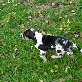 Winston @ 6 weeks