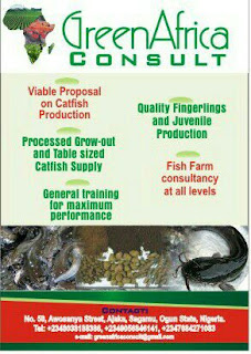 green africa consult