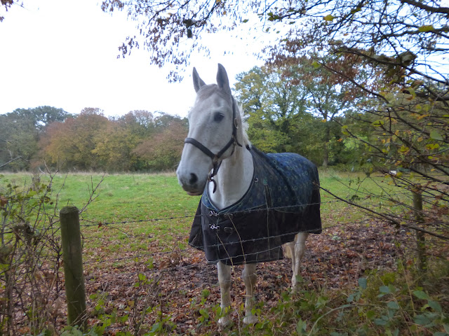 A friendly horse near Bayford