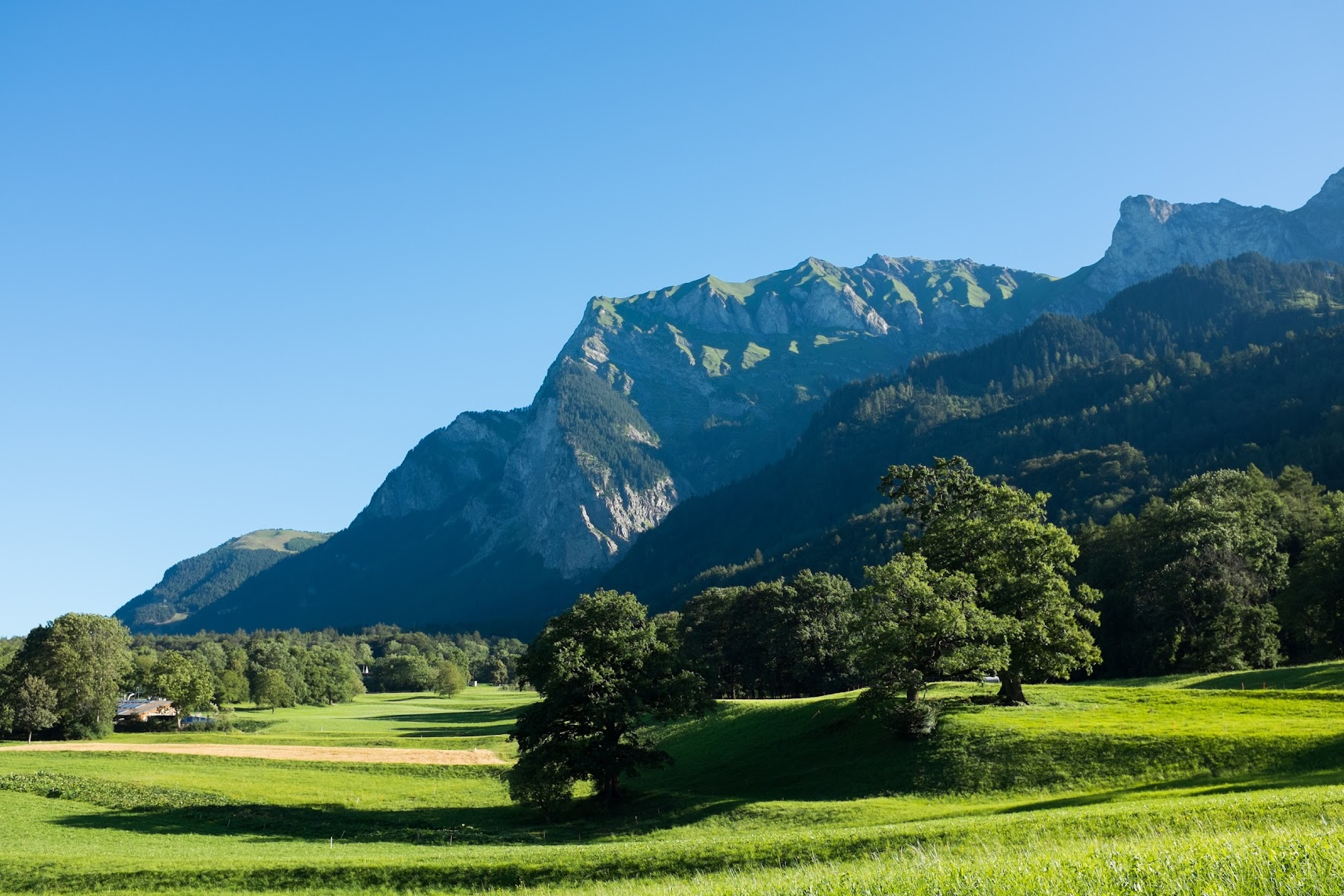 Heidiland: love of nature, vineyards and brown grasshoppers