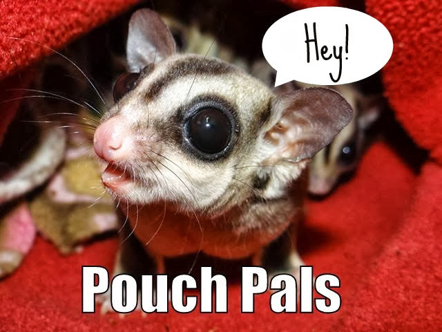 Pouch Pal Sugar Gliders