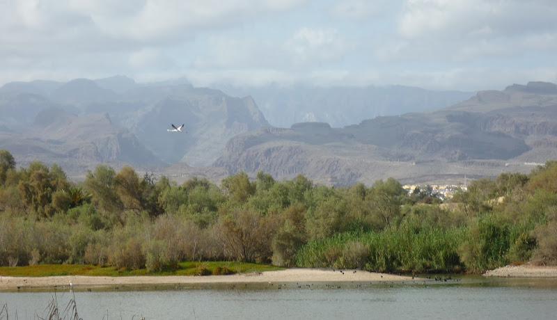 Vogel vor der Silhouette Gran Canarias Bergen.