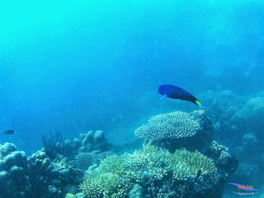 Pulau Harapan, 16-17 Mei 2015 GoPro  13