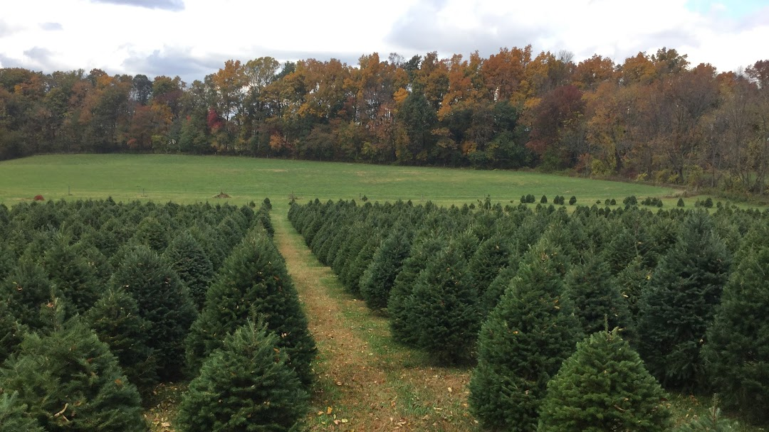 Header image for the site - Collmann Christmas Tree Farm - Christmas Tree Farm In Elverson