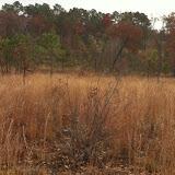 Hunting Habitat 6, Anderson Creek