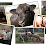 Animal Science's profile photo