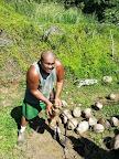 Husking coconuts in Tahiti