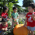 LePort Montessori Preschool Toddler Program Irvine Spectrum - kids on the farm