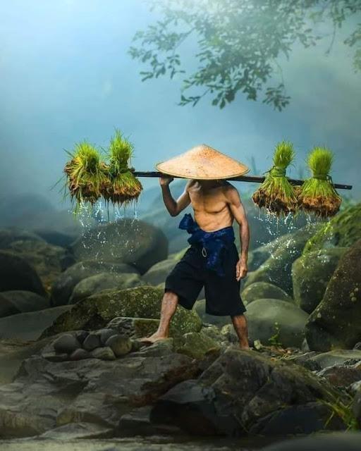 Kehidupan Di Kampung Indah Tanpa Gadget Pemandangan Desa Indonesia Pergi Ke Sawah