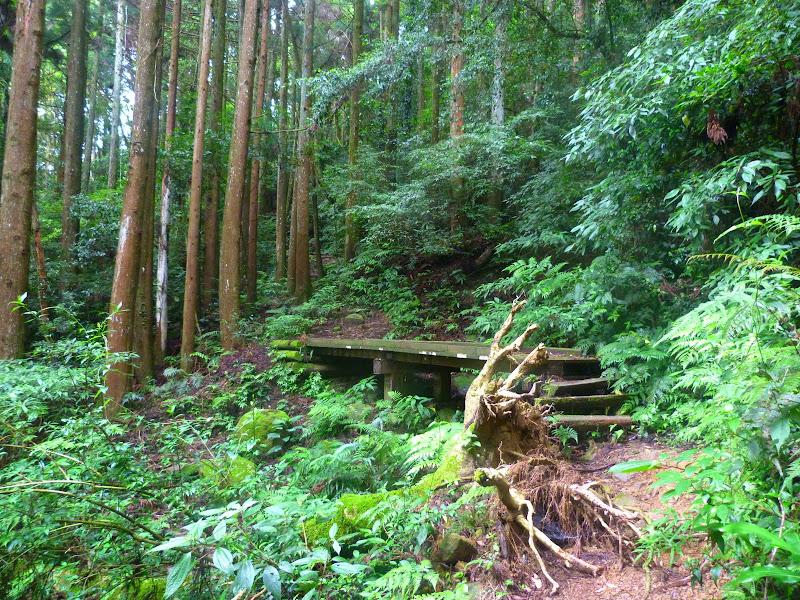 Petite randonnée au sud de Taufen, dans la région de Miaoli - P1330610.JPG