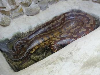 2017.08.07-013 python malais