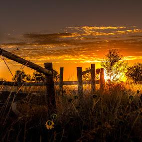 Fence line by Dan Bartlett - Landscapes Sunsets & Sunrises ( farm, wy, fence, ranch, tree, sunset, wyo, wyoming, weed, sunrise, flower, sun,  )