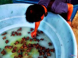 explore-pulau-pramuka-ps-15-16-06-2013-086
