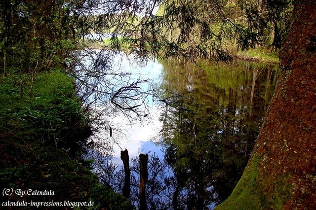 Windgfällweiher Seerundgang