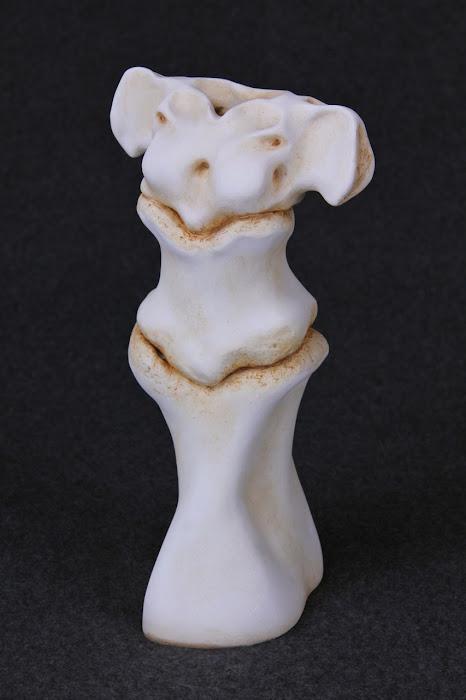 Venus de Vertebra