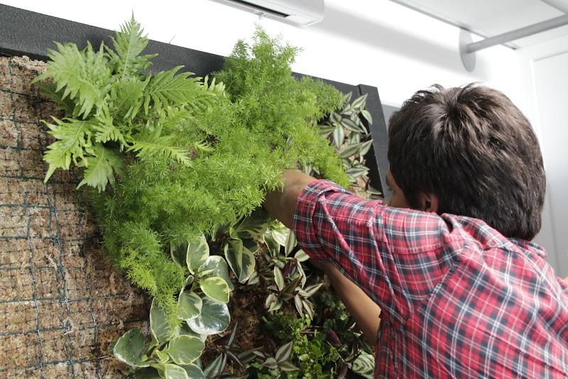 Curso formación jardines jardinería vertical Madrid