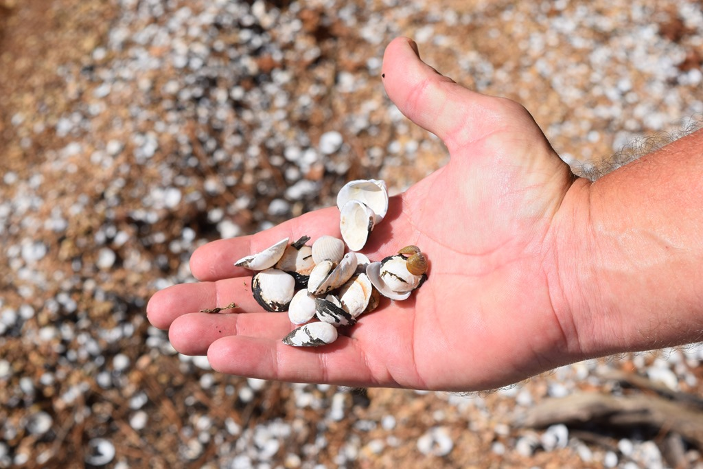 [Shells+on+the+beach-1%5B4%5D]
