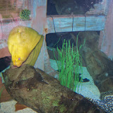 Downtown Aquarium - 116_3985.JPG