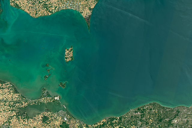 Satellite view of an algae bloom at the west end of Lake Erie, near Toledo and Sandusky, Ohio, on 12 June 2016. The west end of Lake Erie has been troubled by intense algae blooms in recent years. The worst blooms tend to occur in years with heavy spring rains and excess winter snow and ice runoff. Runoff from lakes and streams in this area can bring heavy loads of phosphorous, nitrogen, and other agricultural fertilizers into the lake. The nutrients from farms and from septic systems can promote excessive blooms that can harm water quality and sometimes suffocate other marine organisms. Photo: Joshua Stevens / NASA Earth Observatory