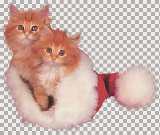 KittiesnSntaht~ckb.jpg