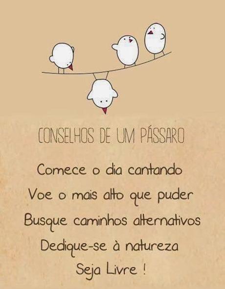 conselhos de um pássaro