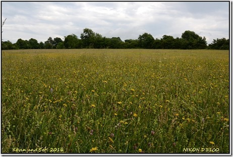 Draycote Meadows - June