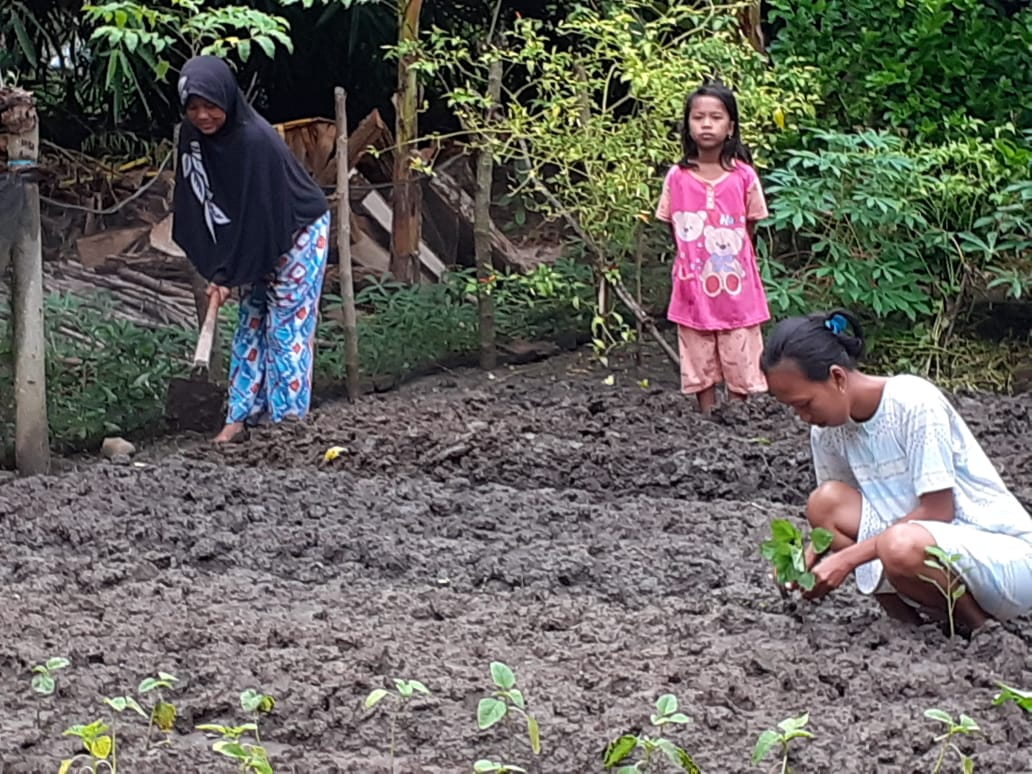 Wanita Tani  Kab. Polman Manfaatkan Pekarangan Rumah Sebagai Sumber Pangan Keluarga