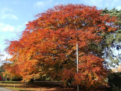 1011060014 Autumn colours in Warehorne