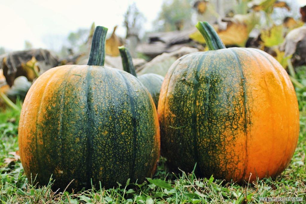 [pumpkin9%5B8%5D]