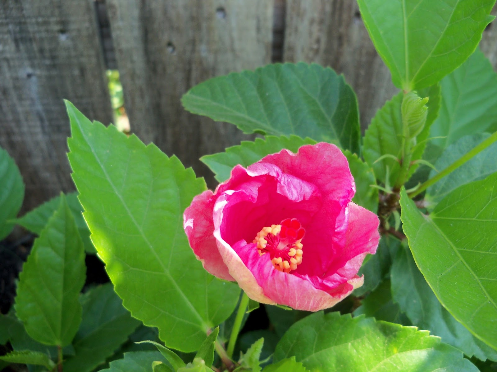 Gardening 2011 - 100_7958.JPG