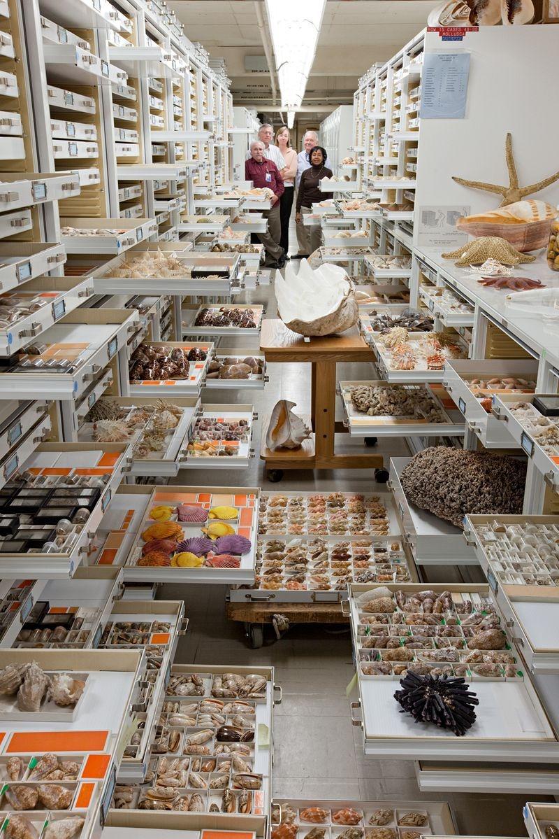 di storia naturale-museo-collezione-7