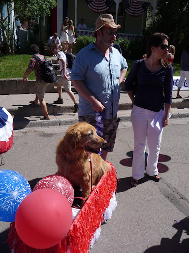 This dog had his own personal parade float.