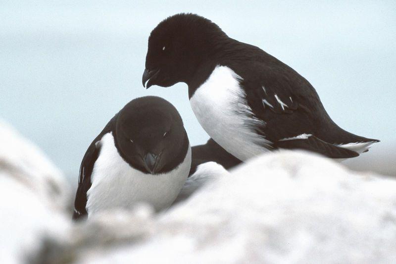 [bayoffundy.ca-SEABIRDS-40-Good-reaso%5B81%5D]
