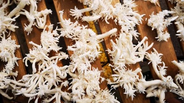 Ваш дом можно утеплить грибами