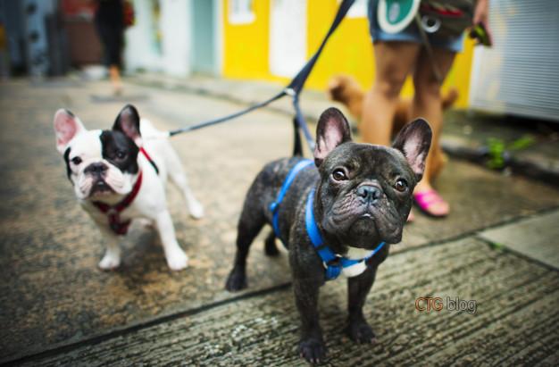 Lợi ích của việc dắt chó đi dạo
