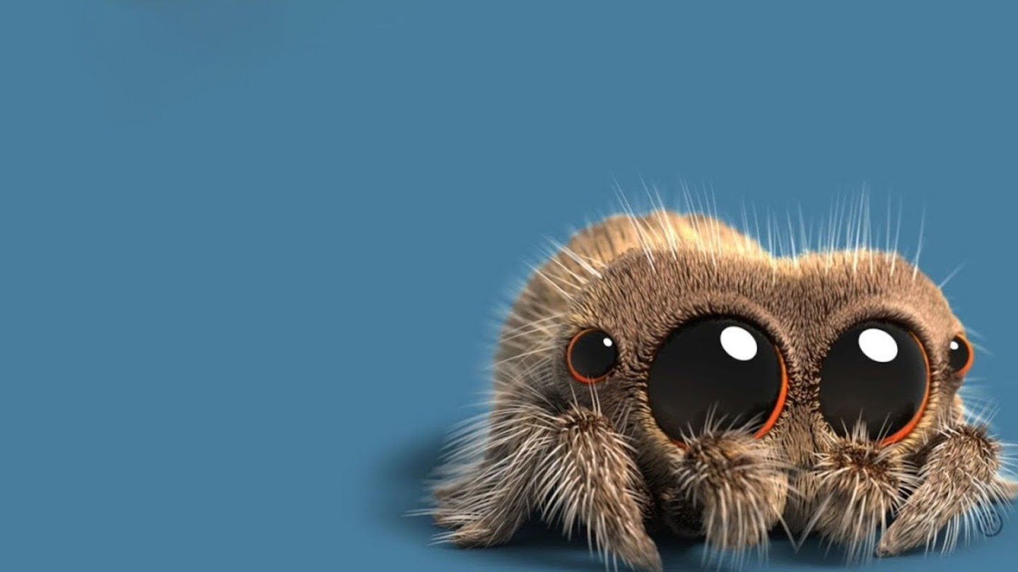 Watch Lucas the Spider live
