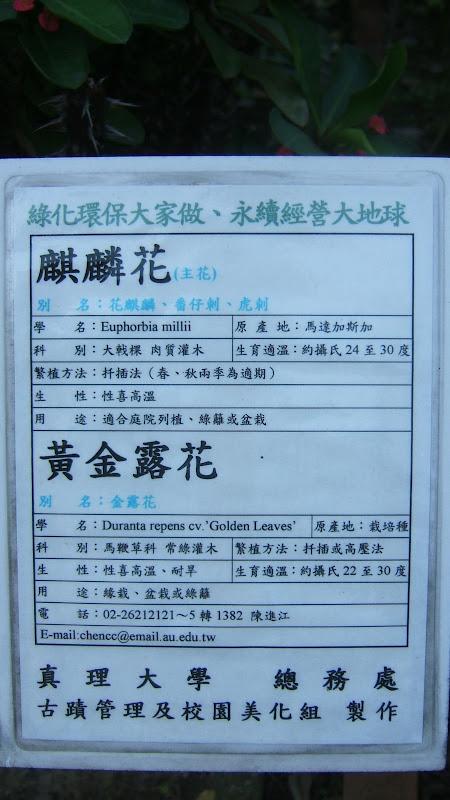 TAIWAN TAIPEI, Lin Hai tai historical house house,Danshui, Miaoli county,Su Ao ,Keelung - DSCF9253.JPG