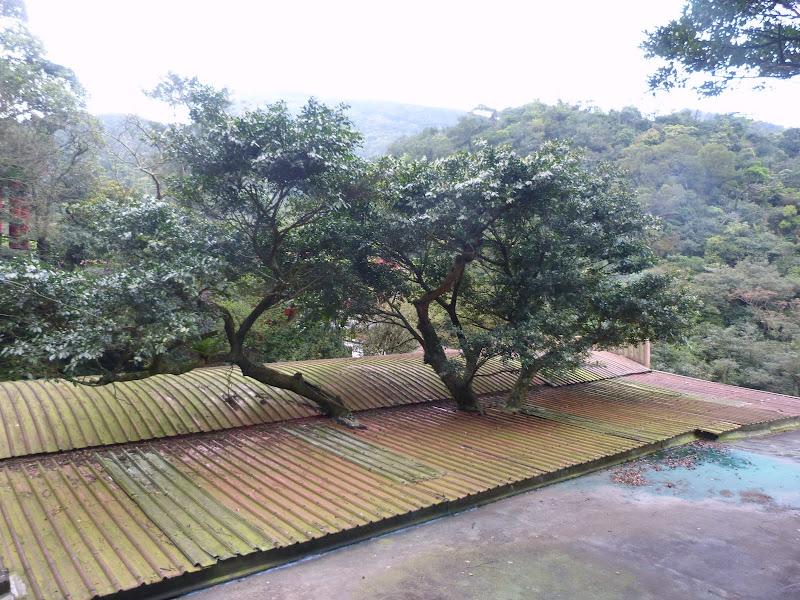 TAIWAN Daxi . Randonnée Taoyan valley - P1260073.JPG